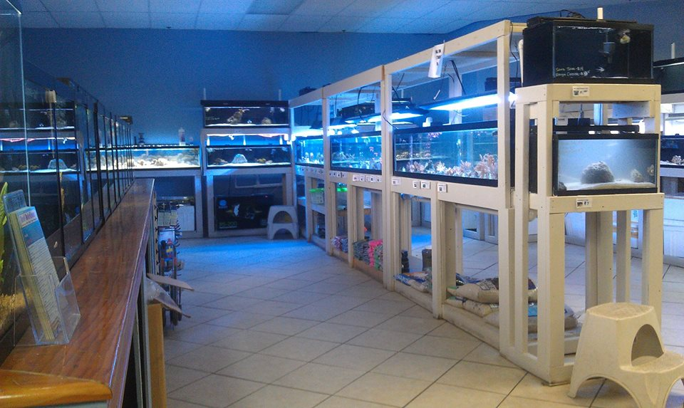 Local fish and aquarium stores in mo for Fish stores around me