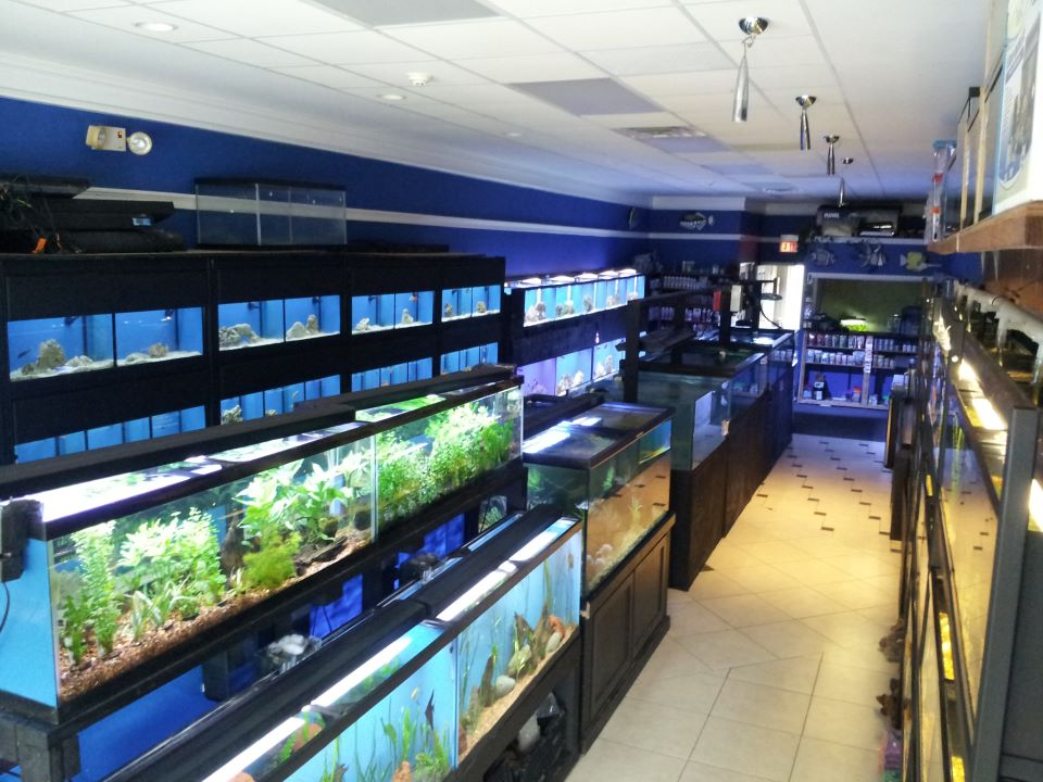 Local fish and aquarium stores in for Fishing stores nj