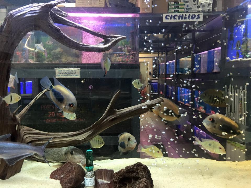Aquarium Stores Houston Image Mag