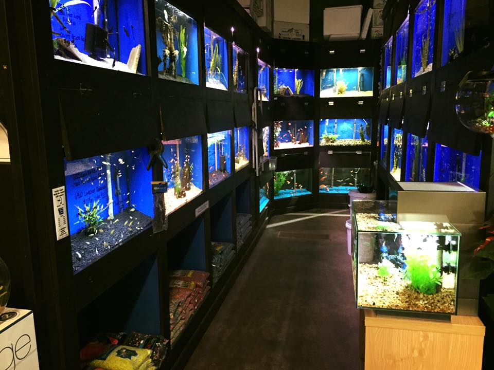 Local fish and aquarium stores in co for Pet stores with fish near me