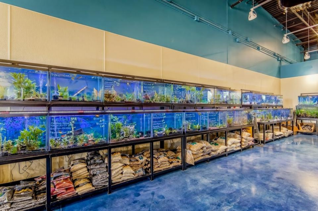 Local fish and aquarium stores in for Tropical fish shop
