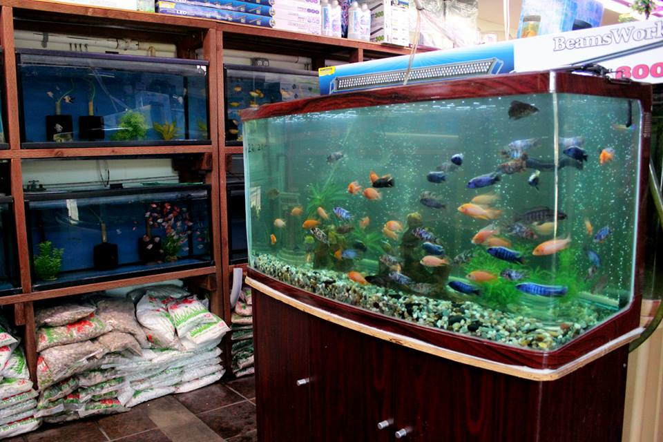 Local fish and aquarium stores in ca for Coy fish tank