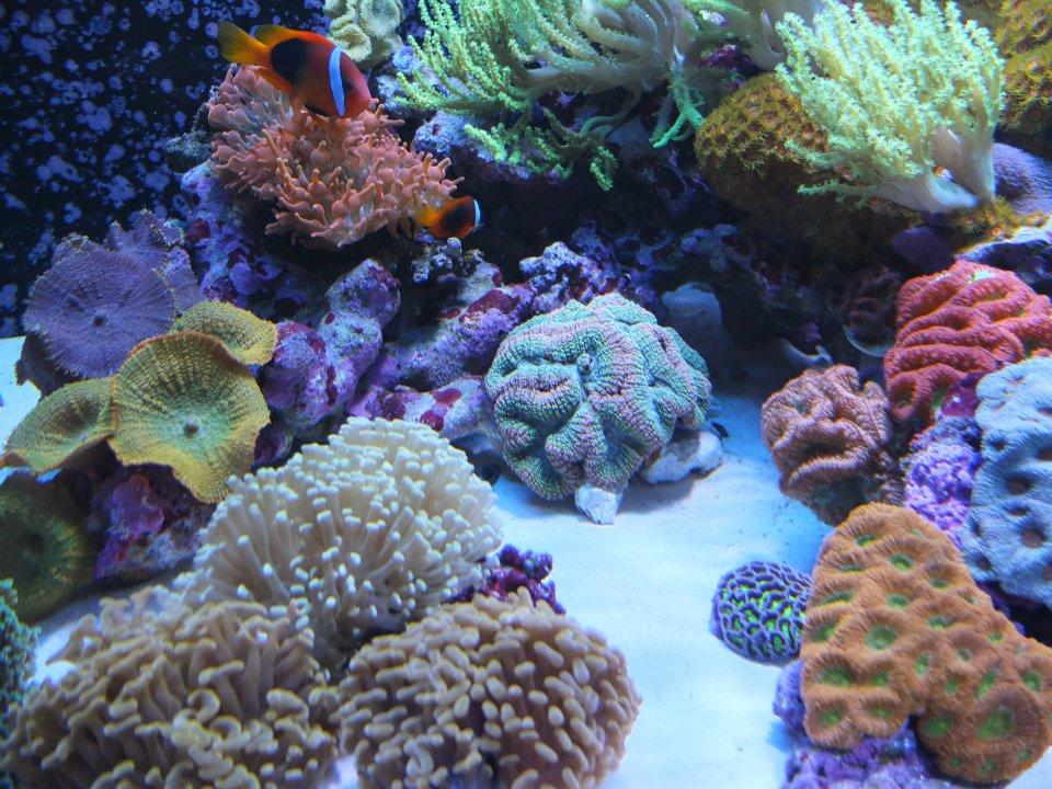 Local Fish and Aquarium Stores in CA FishStoresNearMe.com