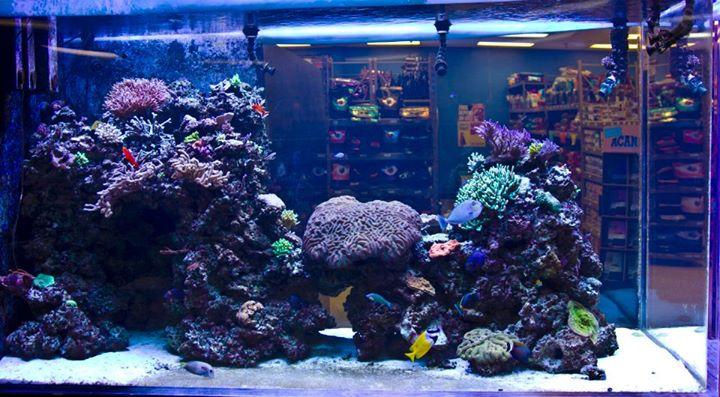 Find A Fish Com Hookup Service