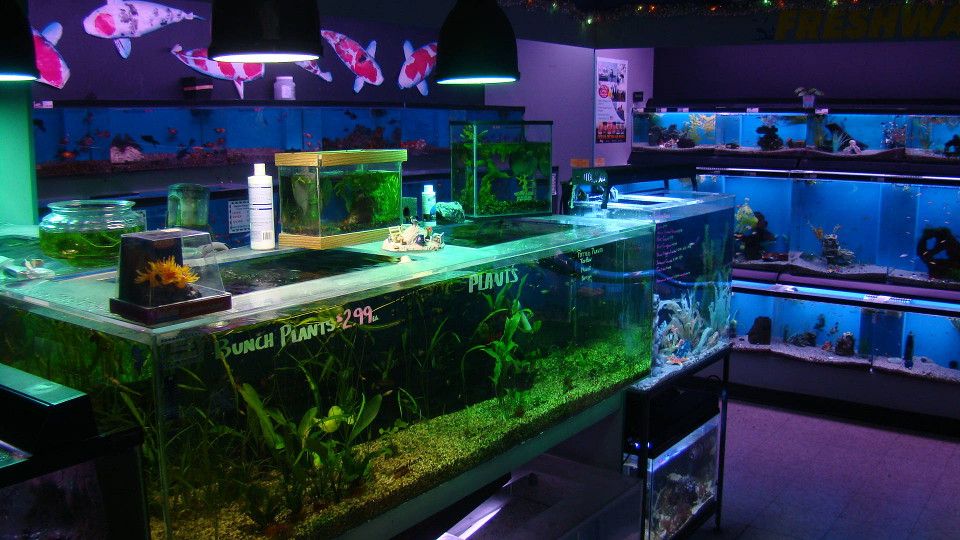 Local fish and aquarium stores in id for Fish pond supplies near me