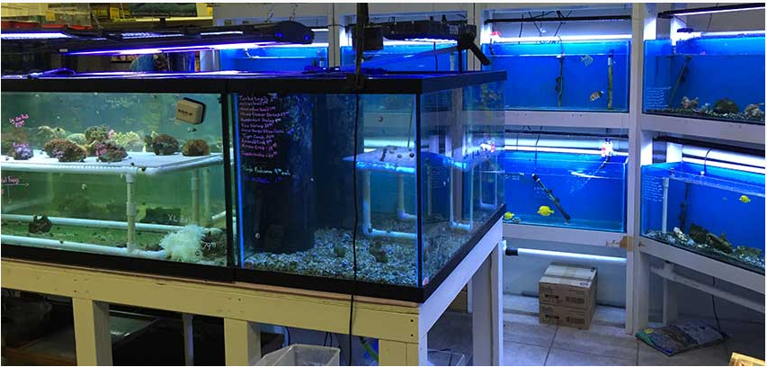 Local fish and aquarium stores in fl for Fish stores around me