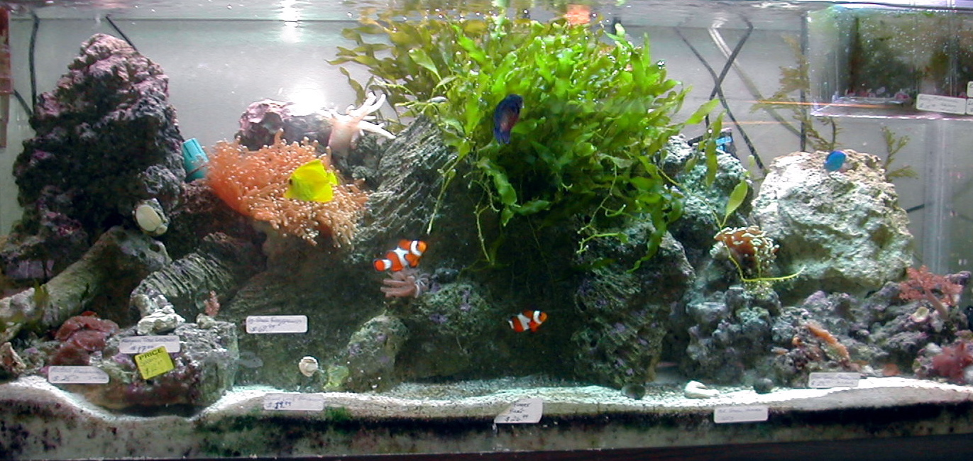 Local fish and aquarium stores in ct for Fish pond supplies near me