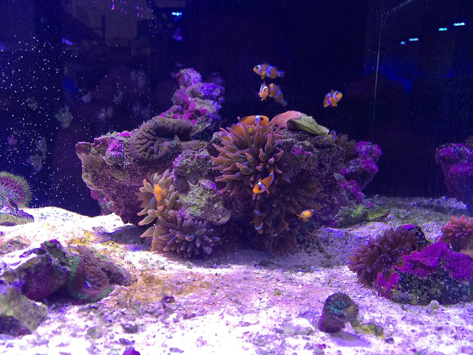 Saltwater Aquarium Near Me Reef Aquariums For Saltwater
