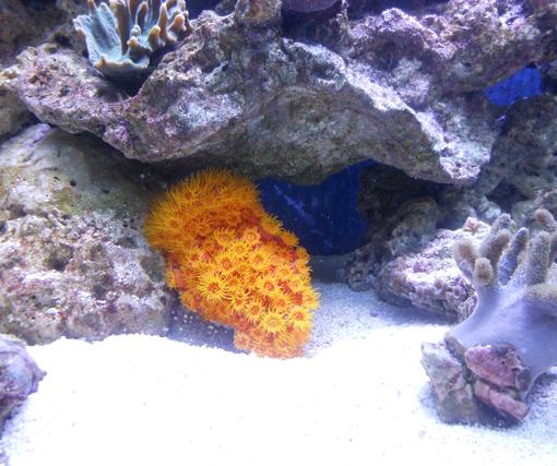 Local Fish And Aquarium Stores In Ny