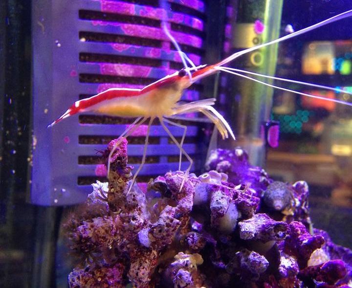 Local fish and aquarium stores in ca for 405 tropical fish