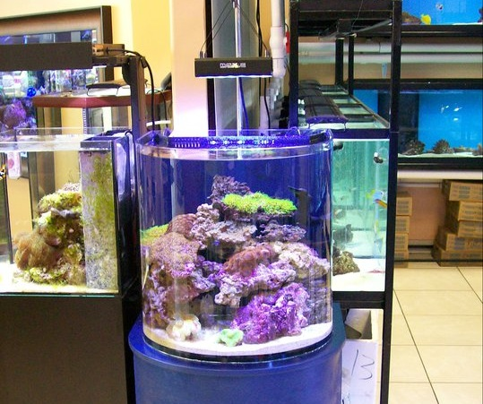 Mid cities aquariums euless tx for Fish supplies near me