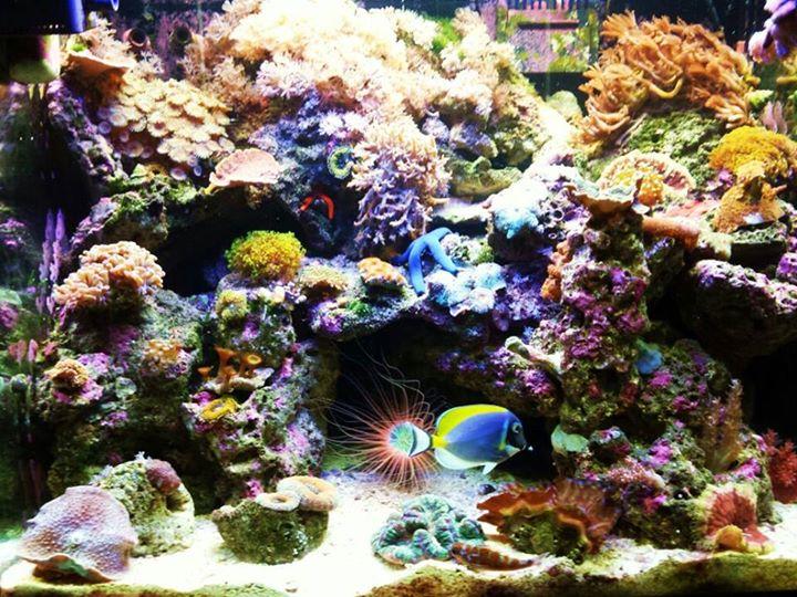 Local Fish And Aquarium Stores In Fl
