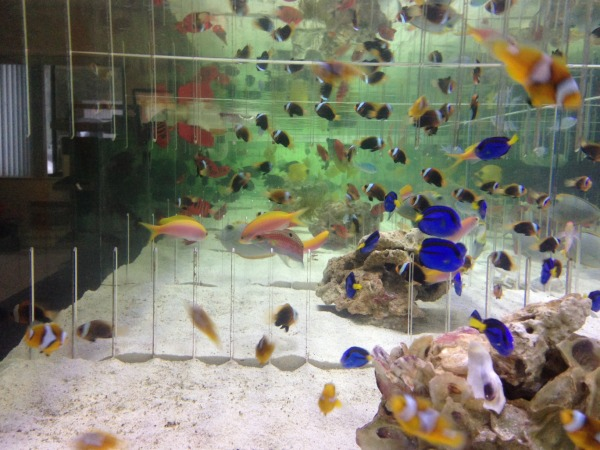 Ocala Aquariums Ocala Fl