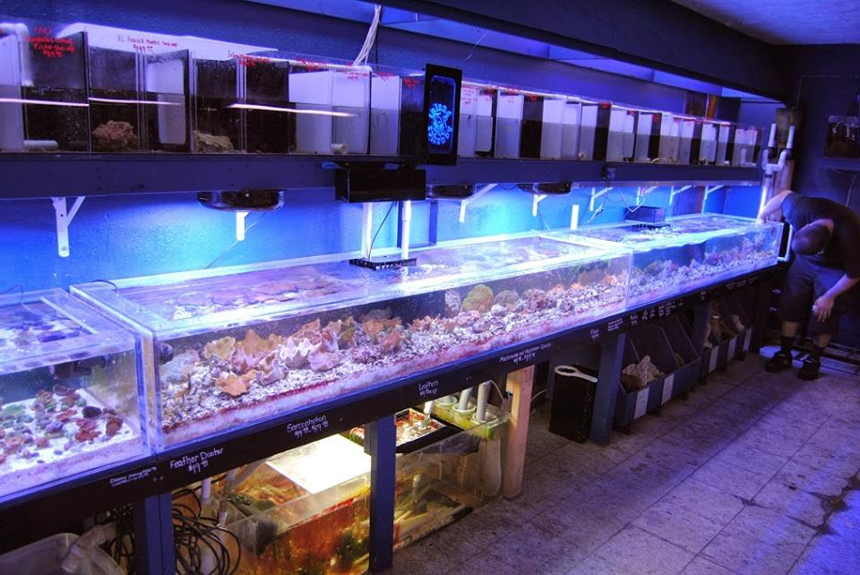 Local fish and aquarium stores in in for Fish stores around me