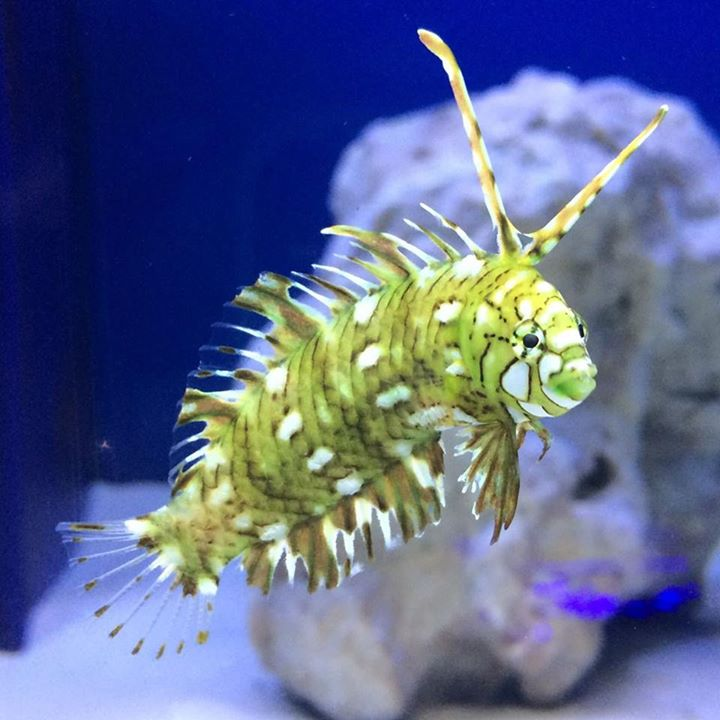 Off the hook marine fish peachtree city ga for Saltwater fish store