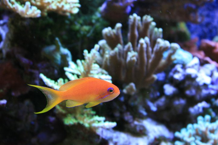 Local fish and aquarium stores in pa for Good places to fish near me