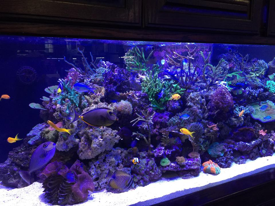 Frank 39 s tanks maintenance fort worth tx for Aquarium fish stores near me