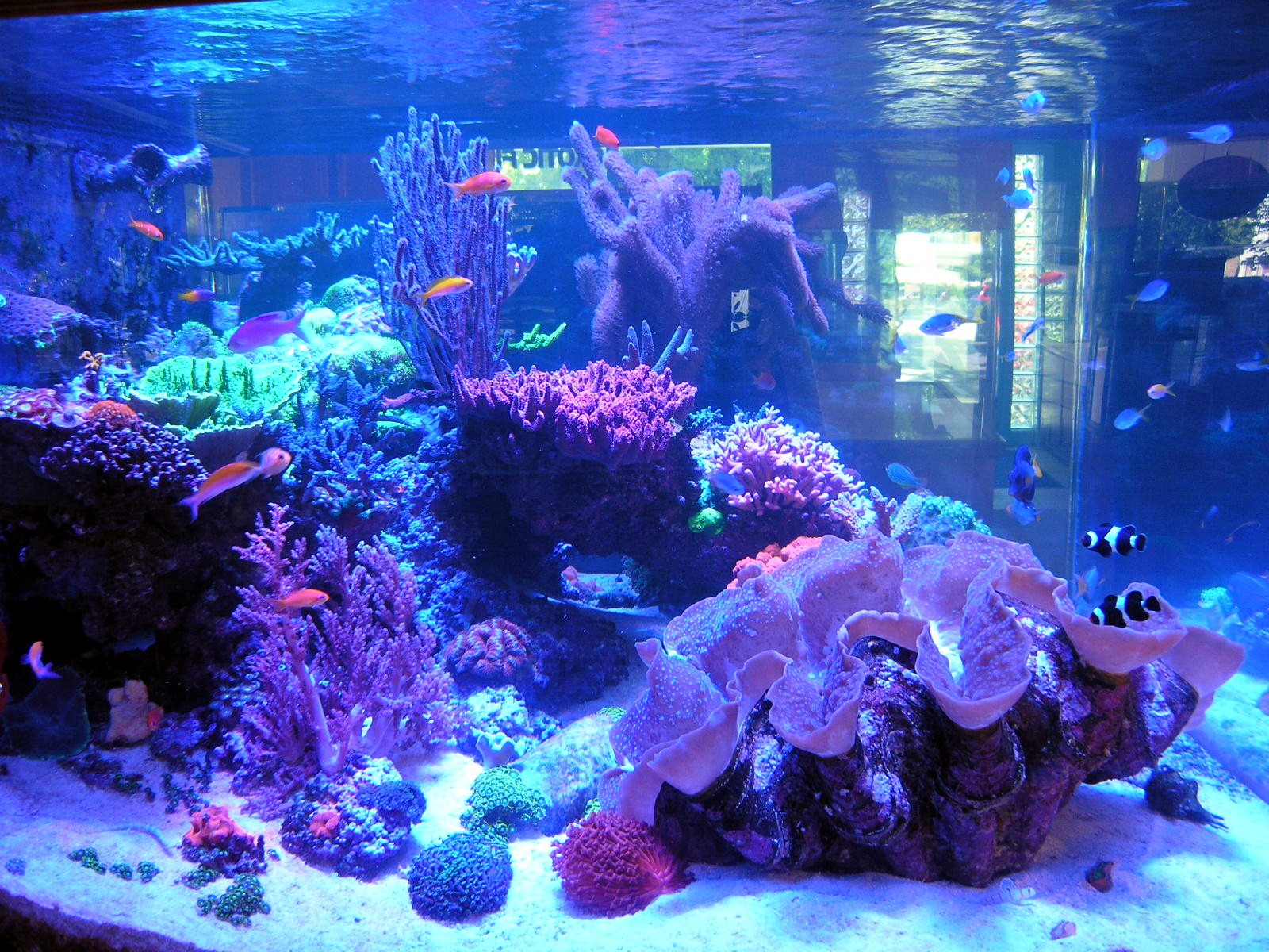 Local fish and aquarium stores in or for Saltwater fish stores near me