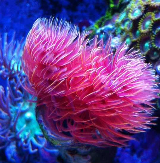 Aquarium plants near me live aquarium plants for sale for Tropical fish near me