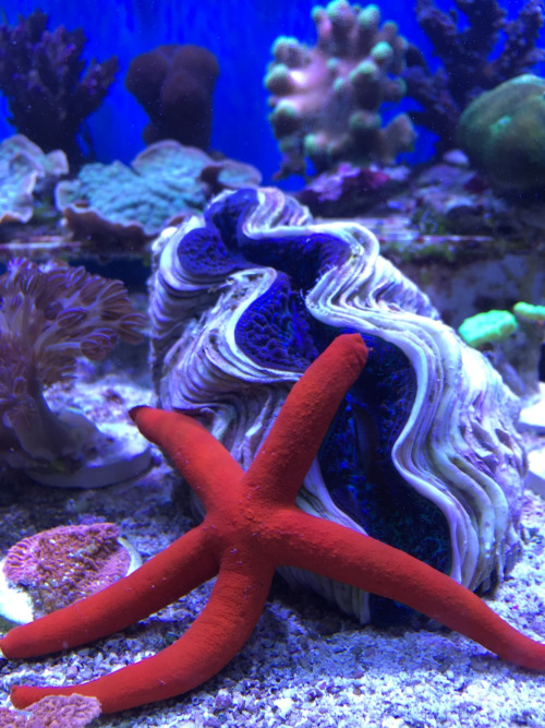 Jawz aquarium elmsford ny for Fish tank cleaning service near me