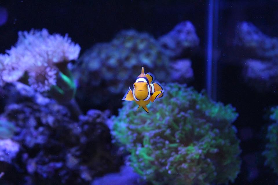 Reef+Pets+Dallas+TX Local Fish and Aquarium Stores in ...