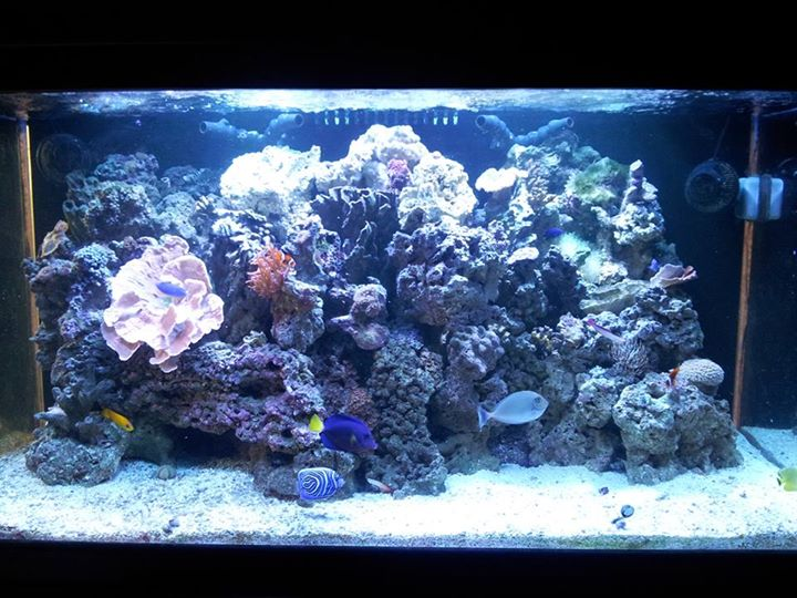 Strictly reef reno nv for Fish store reno