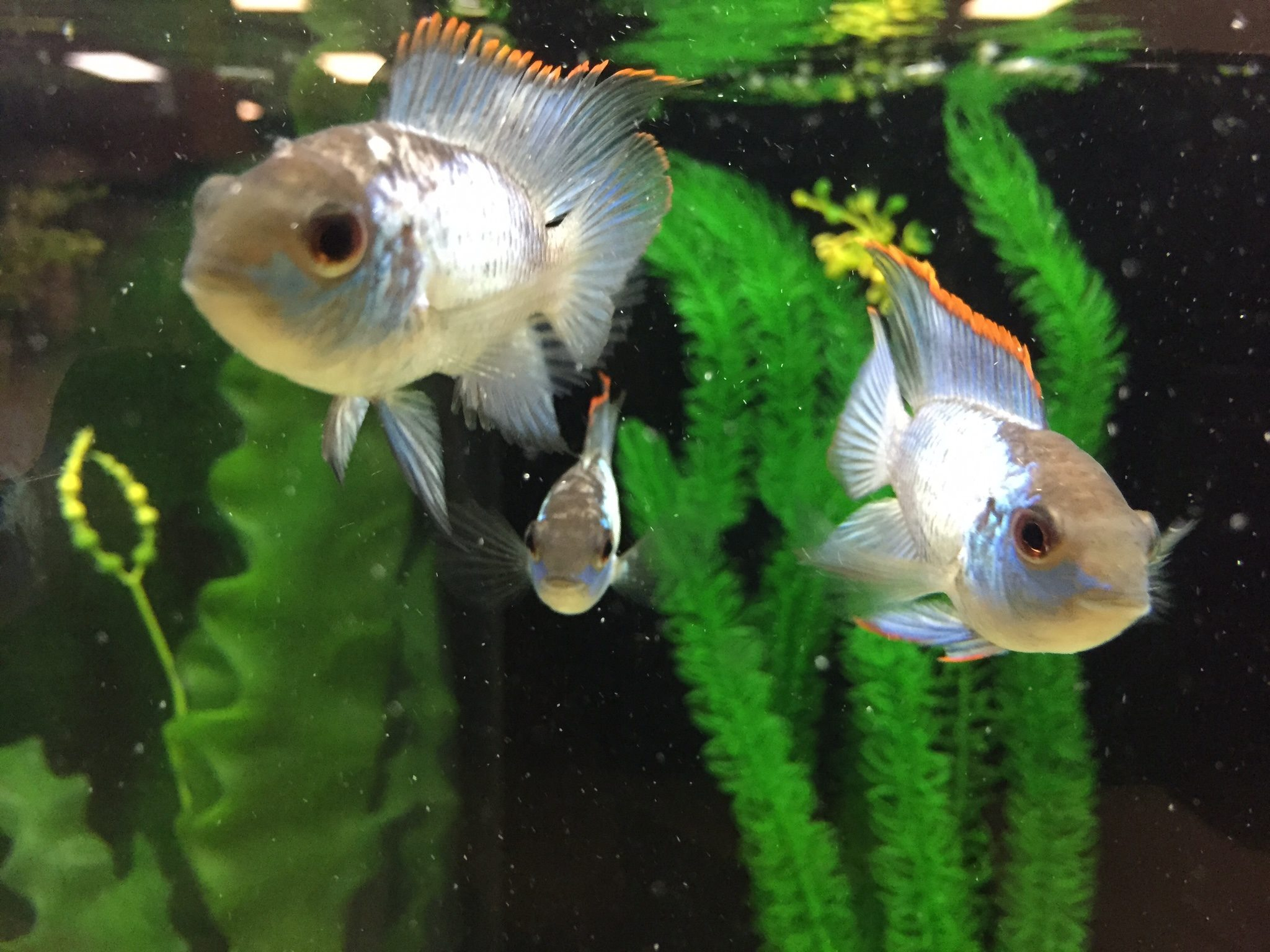 Local fish and aquarium stores in ny for Pet fish near me