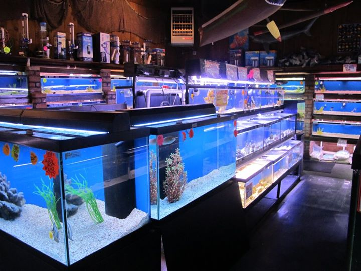 local fish and aquarium stores in