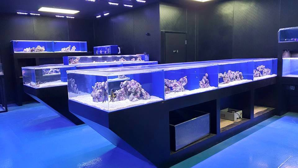 Local fish and aquarium stores in az for Exotic fish store near me