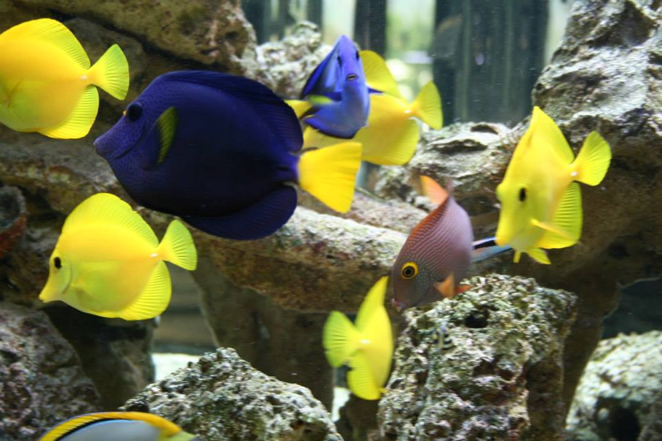 Fish tank near me fish stores near me find local fish for Where to buy pet fish