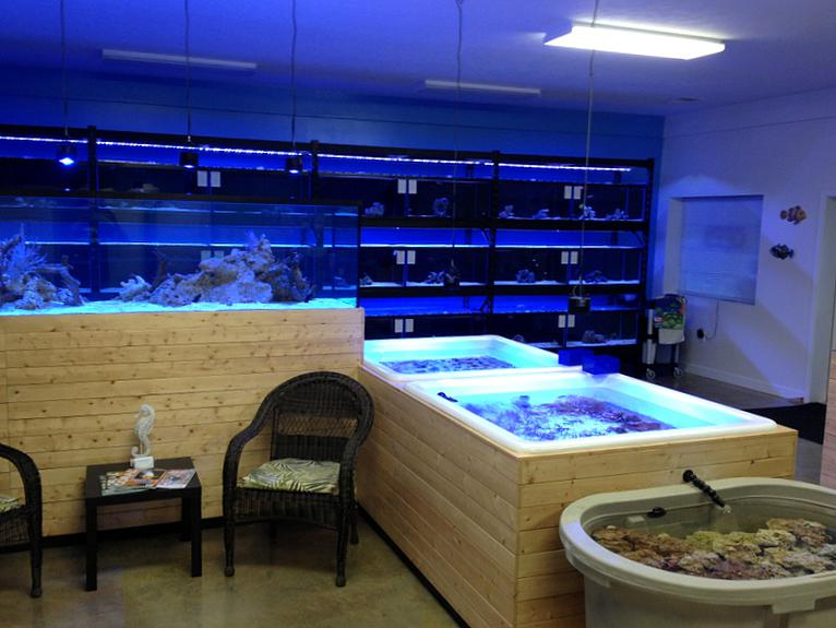 Local fish and aquarium stores in pa for Salt water fish store