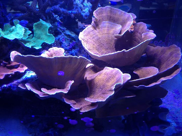 Fish aquarium near me sources of tropical fish stores for Where to fish near me