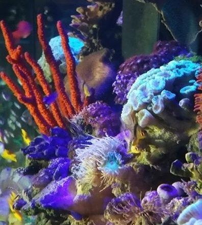 Reef encounter kansas city mo for Saltwater fish stores near me