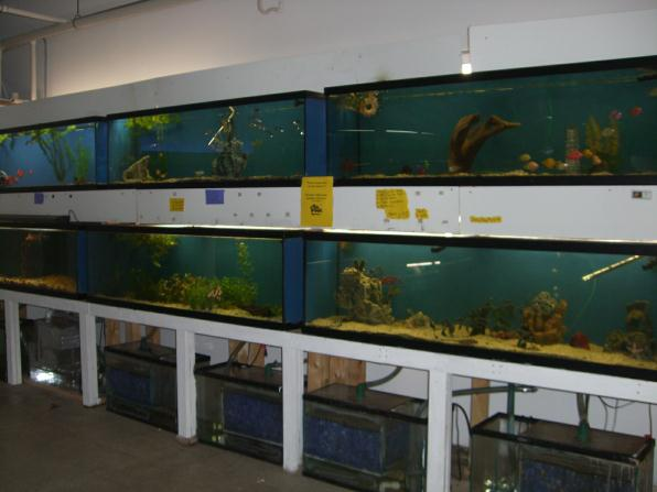 Local fish and aquarium stores in ma for Fish stores around me