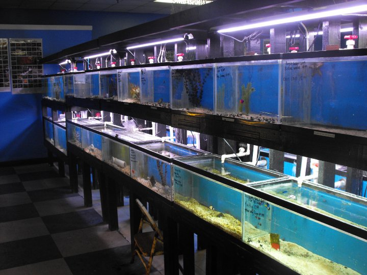 The fish bowl dover de for Fish aquarium stores near me