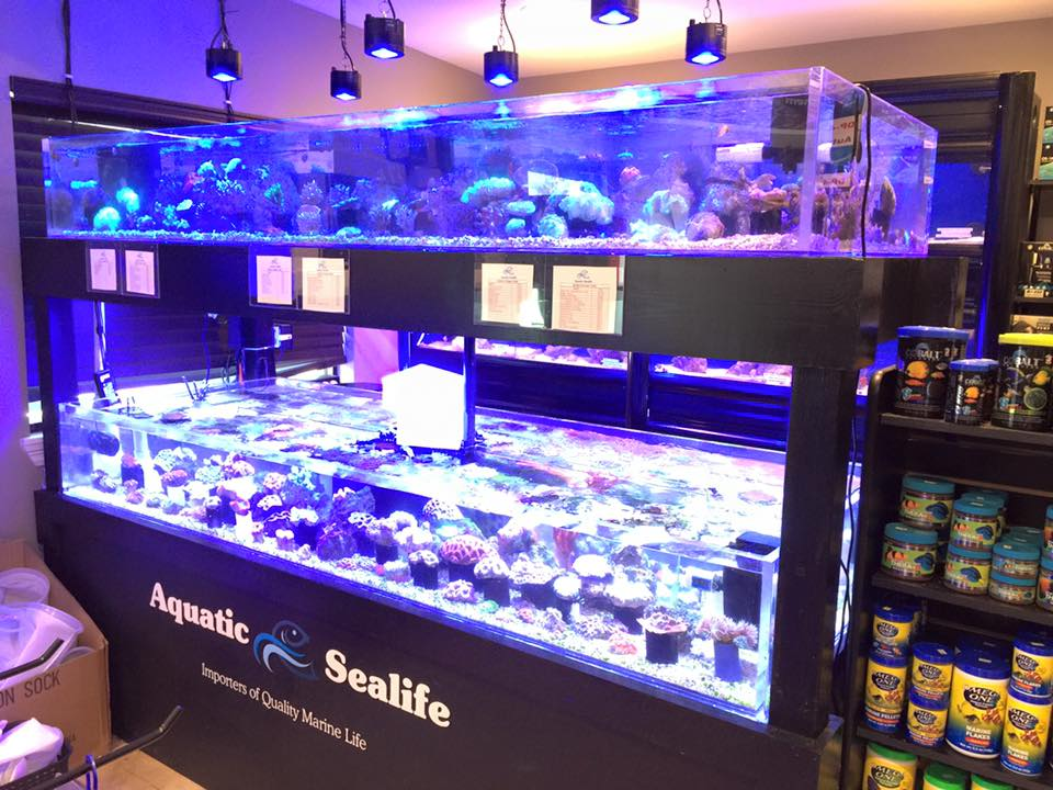 Aquatic sealife metairie la for Fish stores around me