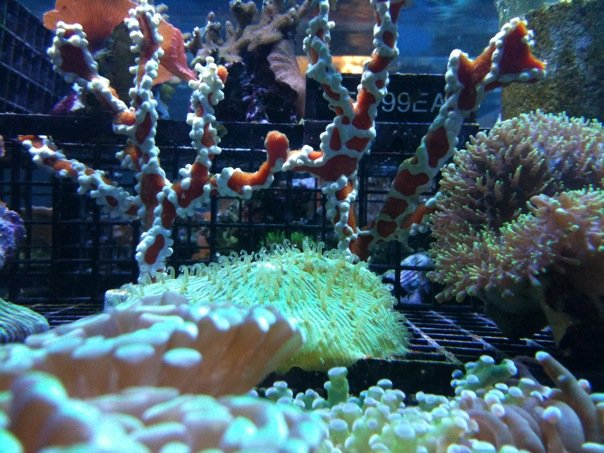 local fish and aquarium stores in ca