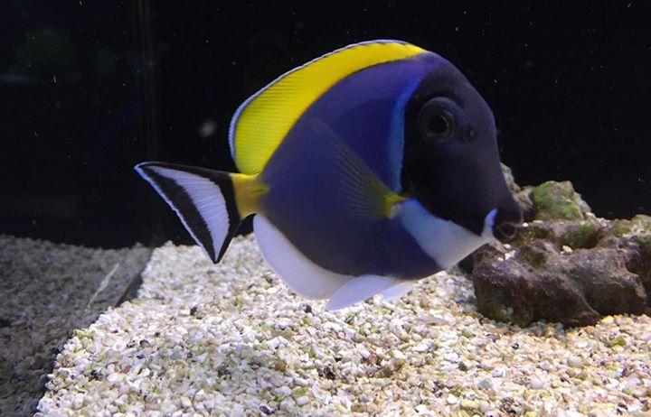 Mr aquarium lubbock tx for Fish aquarium store near me