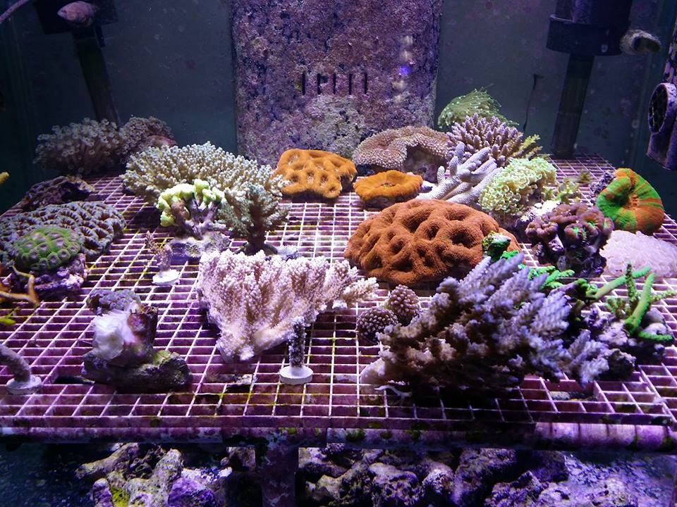 Rick 39 s reef metairie la for Rick s fish and pet