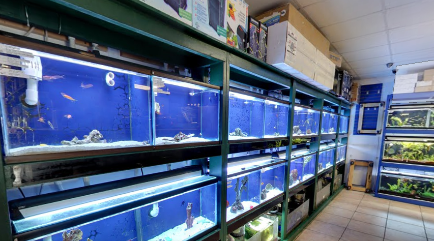 Local fish and aquarium stores in for Fish store san francisco