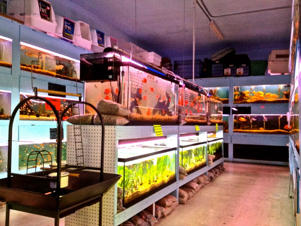 Images of Saltwater Aquarium Store - #rock-cafe
