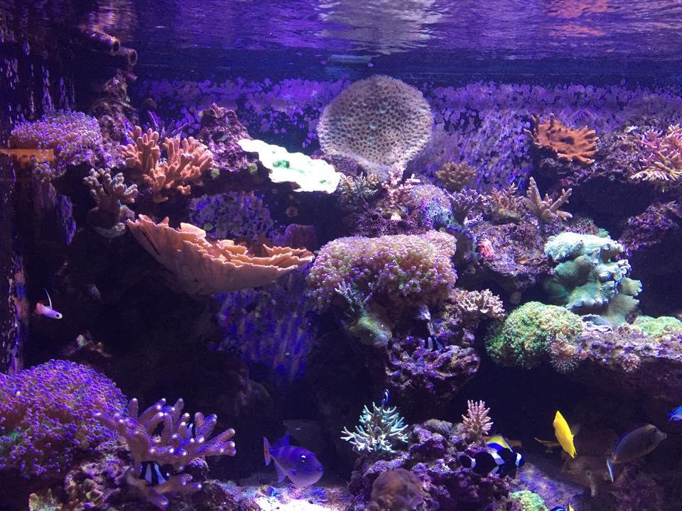 Reef revolution birmingham al for Saltwater fish stores near me