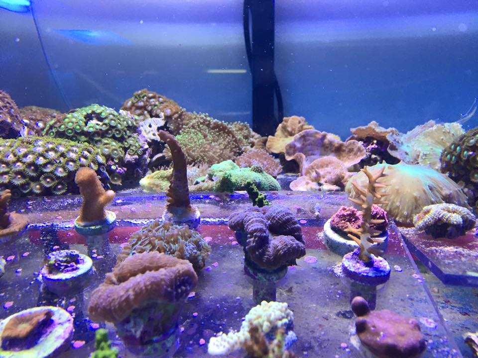 Local fish and aquarium stores in in for Fish store fort worth