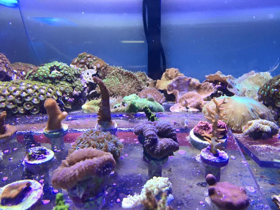 Local Fish And Aquarium Stores In In