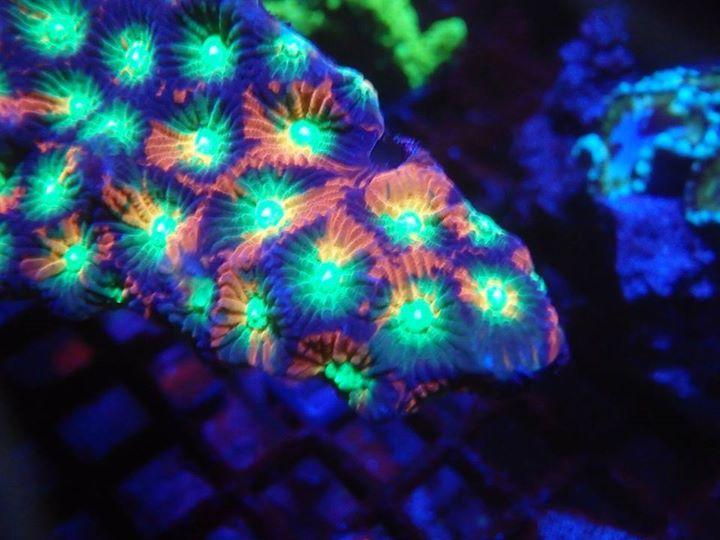 Reef dynamics hampton va for Saltwater fish stores near me