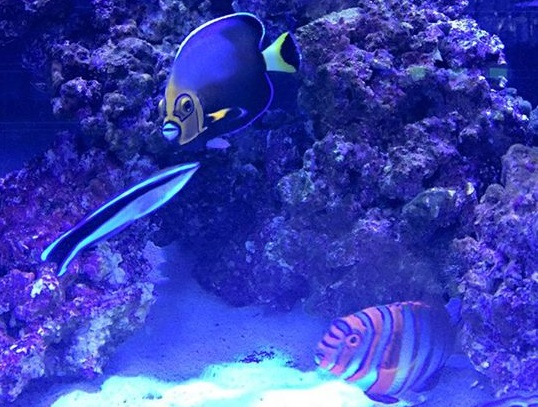 Reef oasis mentor oh for Saltwater fish stores near me