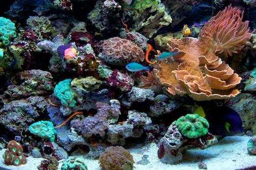 Local fish and aquarium stores in for Exotic fish store