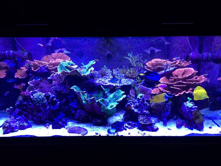 Sierra fish and pets renton wa for Fish tank cleaning service near me