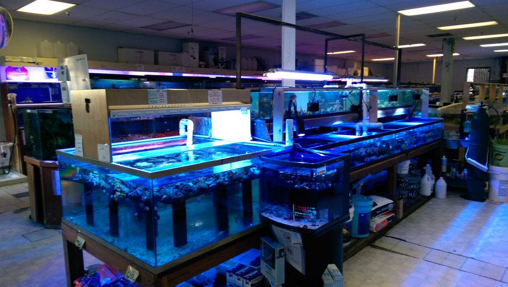 Local fish and aquarium stores in ca for Fish stores around me