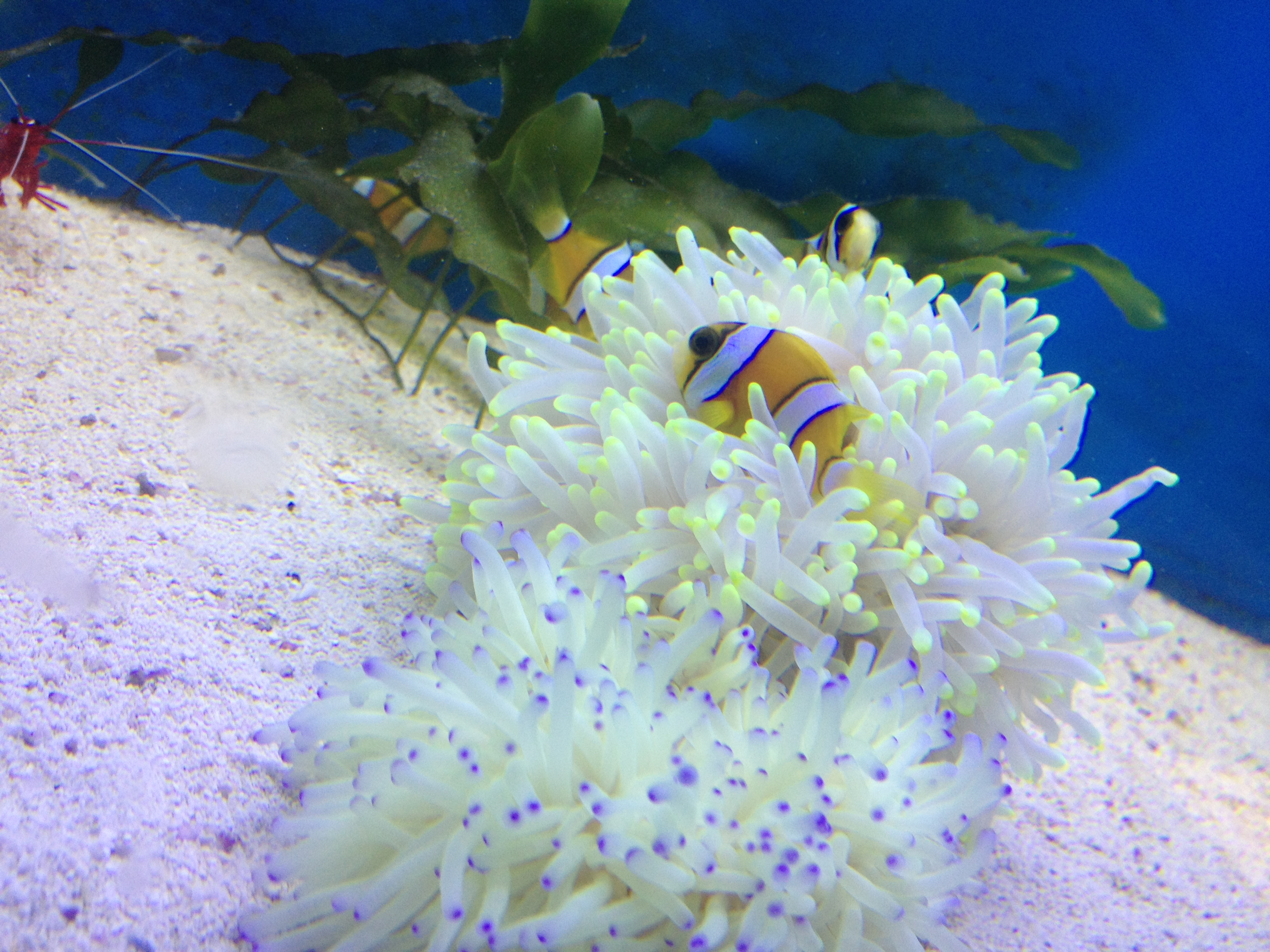 Local fish and aquarium stores in tx for Tropical fish near me